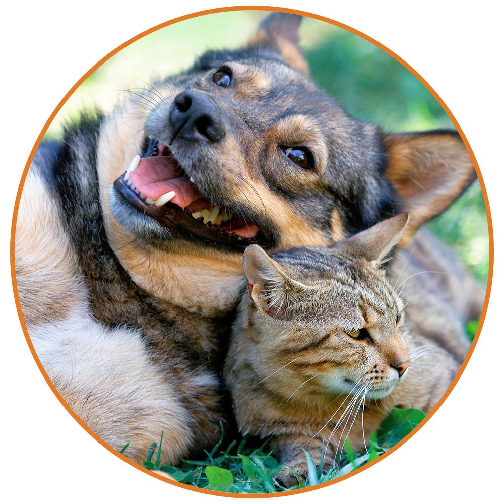 tierheilpraxis hohenzethen tier ganzheitliche therapien